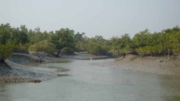 Tour De Sundarban - Day Tours